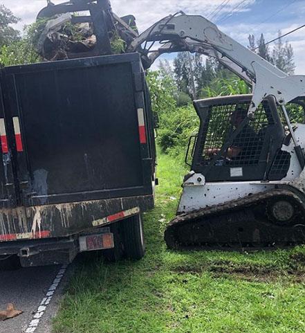 Lantana Debris Removal